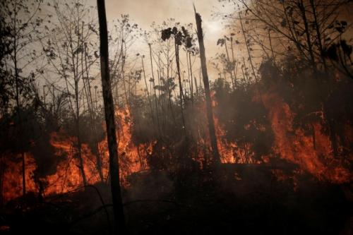 Kebakaran hutan Amazon. (Foto: Reuters)