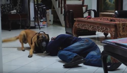 Anjing dan orang di dalam rumah