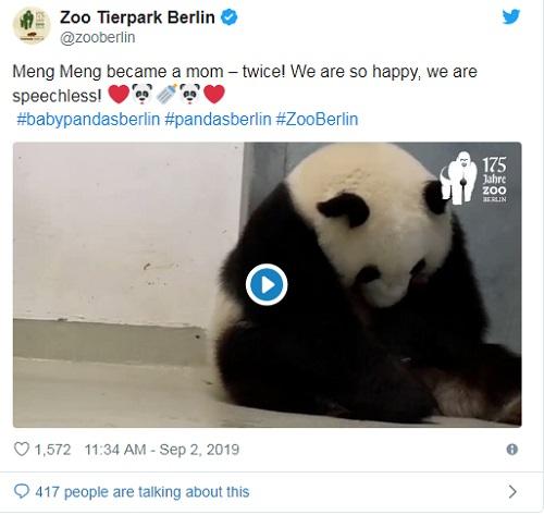Panda Raksasa Meng Meng Lahirkan Anak Kembar