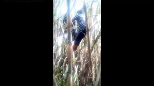 Motor ojol nyangkut di pohon bambu. (Foto: Facebook Wawan Suprianto/Berita Viral)