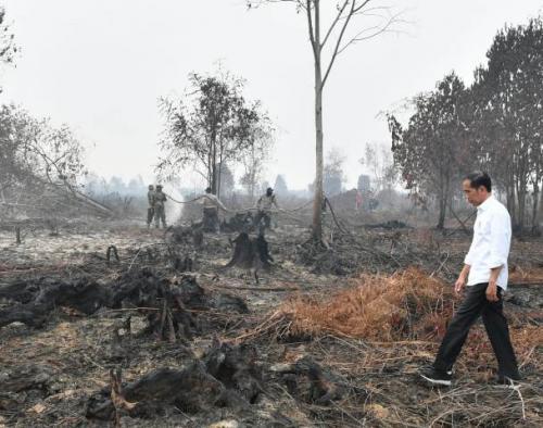 Jokow Tinjau Lokasi Karhutla