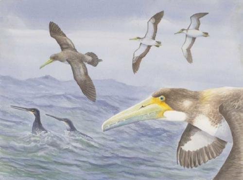 Fosil Burung Tertua di Dunia Ditemukan