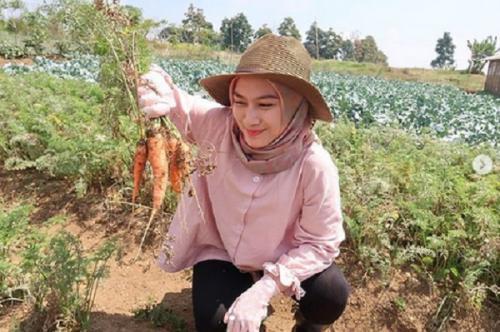 Panen wortel