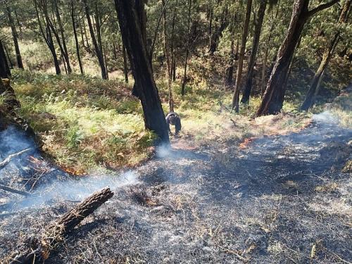 Kebakaran di Gunung Arjuno (Foto: BPBD Kota Batu)