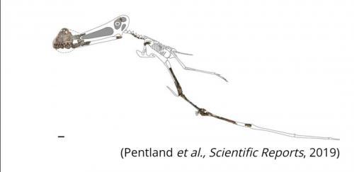 Fosil Reptil Terbang Ditemukan di Australia