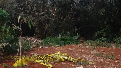 Kebon bambu terbakar