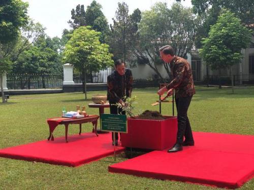 Presiden RI Jokowi dan PM Belanda Mark Rutte menanam pohon damar di halaman Istana Kepresidenan Bogor, Jabar, Senin (7/10/2019). (Foto : Okezone.com/Fakhrizal Fakhri)