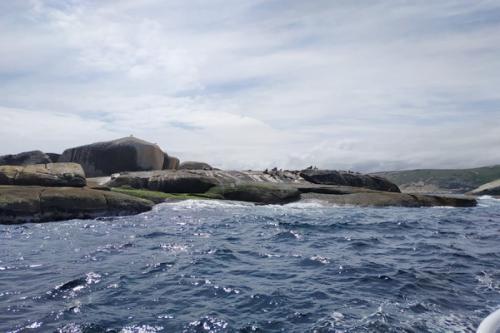 Singa laut berjemur