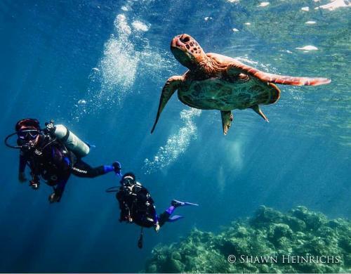 Hamish Daud diving
