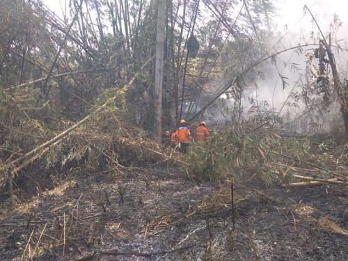 Kebakaran di Gunung Arjuno (Foto: BPBD Jawa Timur)