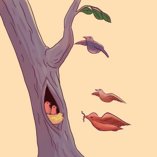 Burung atau wajah