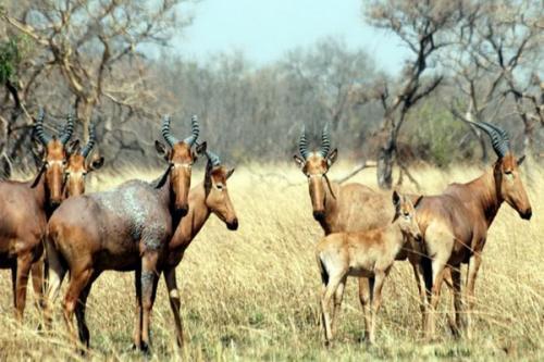 Taman yang memiliki area seluas 275,5 km ini terletak di ujung utara Benin di departemen Atacora