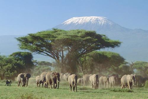 Tidak perlu diragukan lagi, taman ini adalah taman terindah di Kenya.