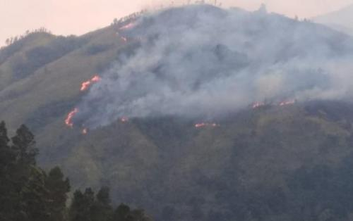 Kebakaran di hutan Gunung Lawu. (Foto: Istimewa)