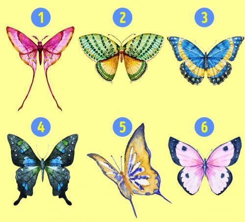 Caranya mudah, cobalah pilih salah satu gambar kupu-kupu ini dan temukan jawabannya.