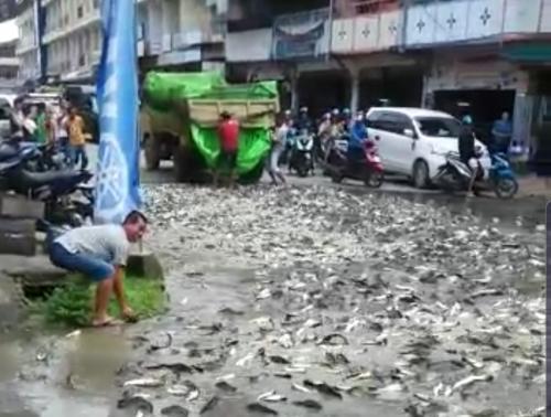 Ikan Patin Tumpah