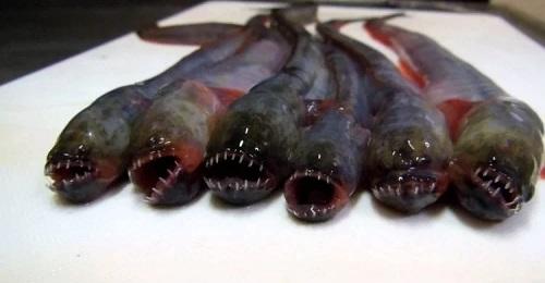 Ikan Alien