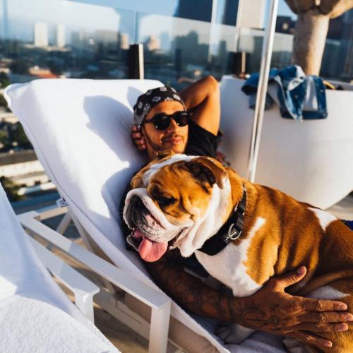Lewis dan anjing