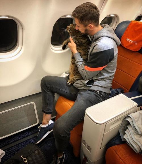 Pria dan kucing di pesawat