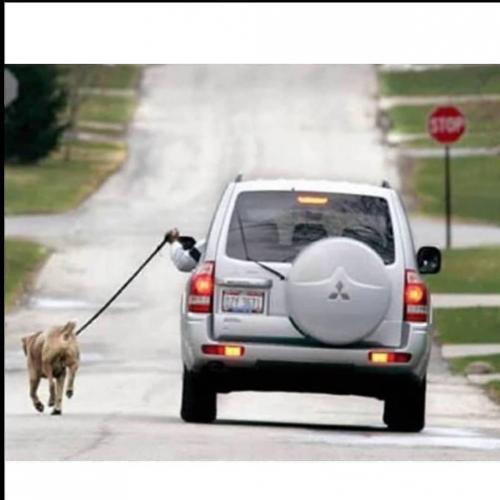 Tapi jika Anda harus mengajak jalan-jalan anjing berukuran besar, tentu bakal menguras banyak energi.