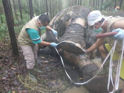 Gajah Sumatera Ditemukan Mati dengan Kondisi Gading dan Kepala Terpotong di Riau (foto: Ist)