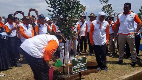 Menteri LHK Siti Nurbaya tanam pohon kacang termahal di dunia (Foto : Okezone.com/Avirista)