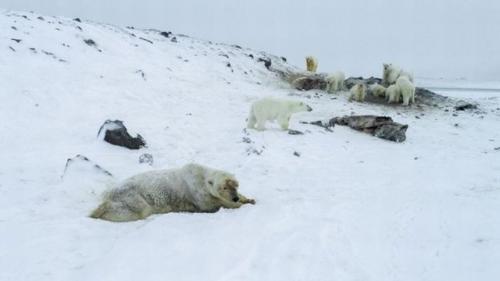 Foto/WWF