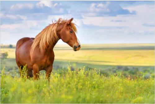 Ilustrasi kuda. (Foto: Istimewa)