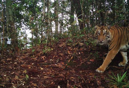 (Foto: WWF)