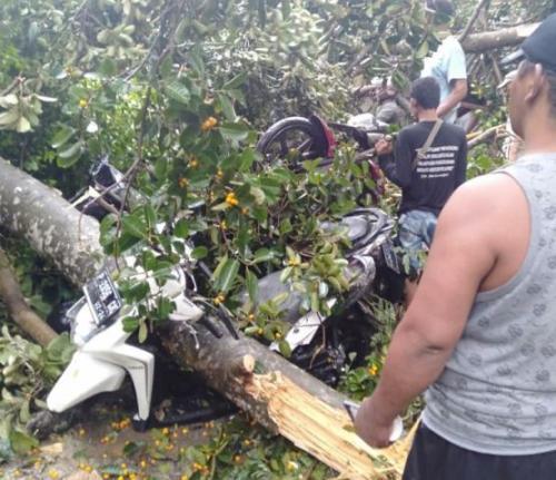 Pohon bertumbangan karena puting beliung di Kediri Foto: BNPB