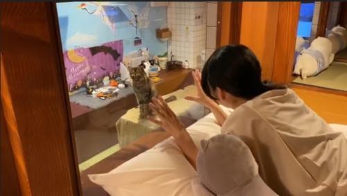 Hotel Kucing