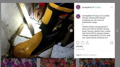 Evakuasi ular kobra di Pasar Minggu. (Instagram/humasjakfire