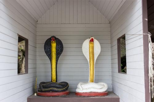 Bahkan bagi penduduk desa king cobra disebut sebagai ular malaikat.
