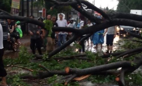 pohon tumbang Foto Wijayakusuma