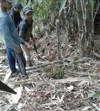 Penemuan 35 ekor anak ular king kobra di Dusun Sindangsari, Desa Jayasari, Kecamatan Langkaplancar, Kabupaten Pangandaran, Jawa Barat. (Ist)