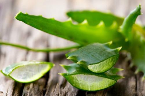 Tanaman ini juga dapat digunakan untuk mengatasi banyak masalah pada kulit Anda.
