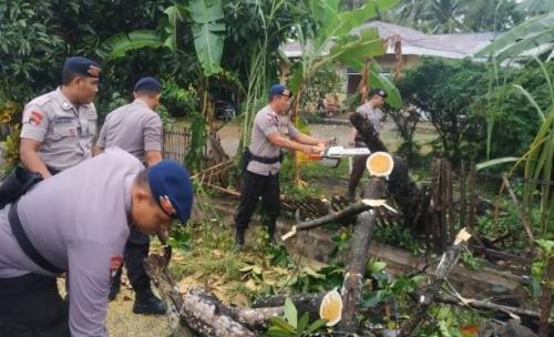 Pohon tumbang di Gorontalo