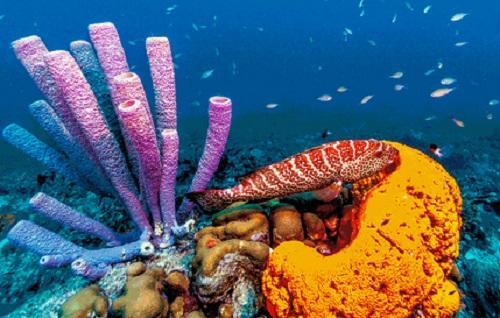 spons salah satu biota laut