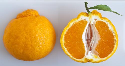 Jeruk Mandarin Dekopon