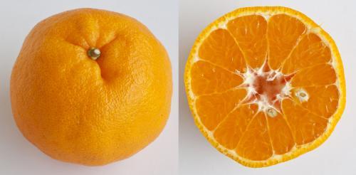 Jeruk Mandarin Lukan