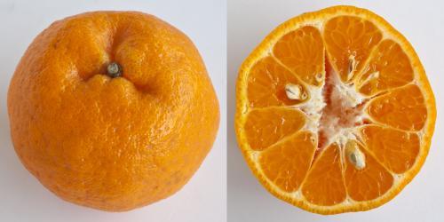 Jeruk Mandarin Ponkan