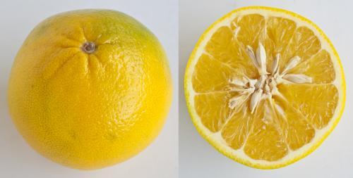 Jeruk Mandarin Mandelo