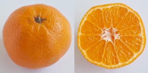 Jeruk Mandarin Clementine