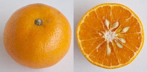 Jeruk Mandarin Kinno