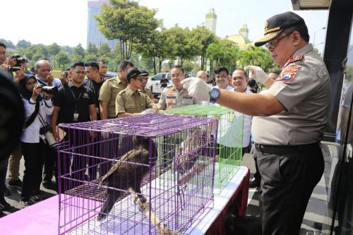 Polda Jatim ungkap kasus penjualan satwa dilindungi. (Foto : Ist)