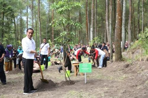 Presiden Jokowi Tinjau Taman Nasional Gunung Merapi (foto: Ist)