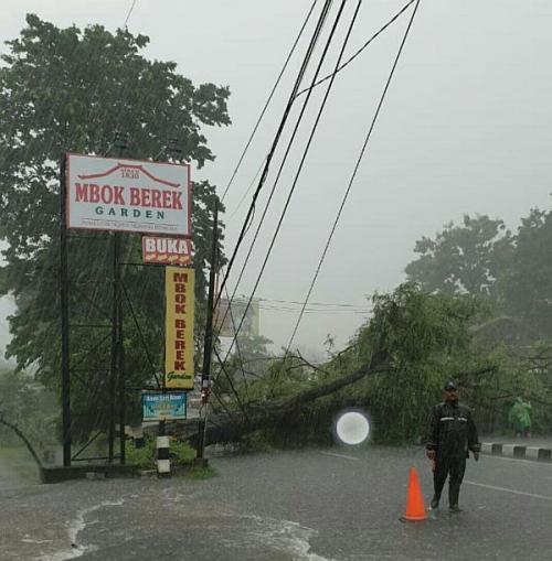 Hujan Lebat di Sleman, Sejumlah Pohon Tumbah hingga Atap Rumah Beterbangan (foto: Pudalops Sleman)