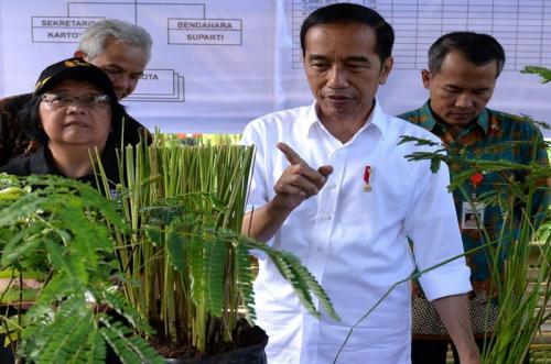 Jokowi Nanem pohon
