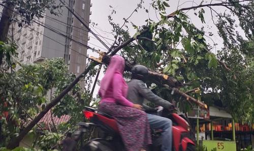 Angin Kencang Sebabkan Pohon Tumbang di Tangsel (foto: Okezone/Hambali)