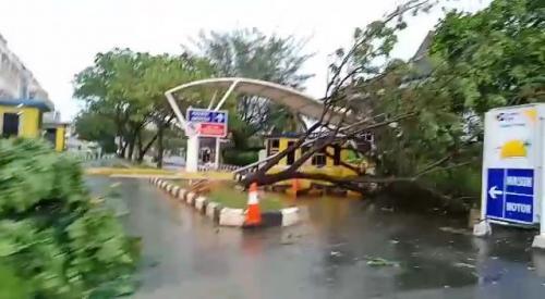 Pohon bertumbangan setelah badai menerjang Pontianak (Foto : Okezone.com/Ade)